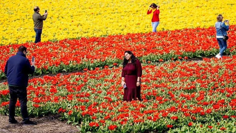 Люди приїжджають в тюльпанові поля заради красивих фото, наражаючи себе на небезпеку зараження