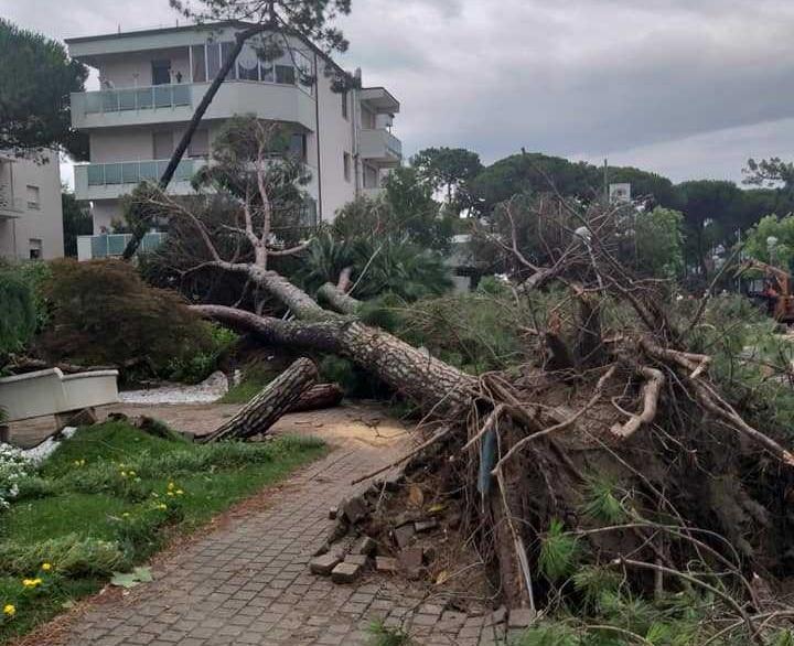 Ураган в Романии: вырванные деревья и разбитые авто