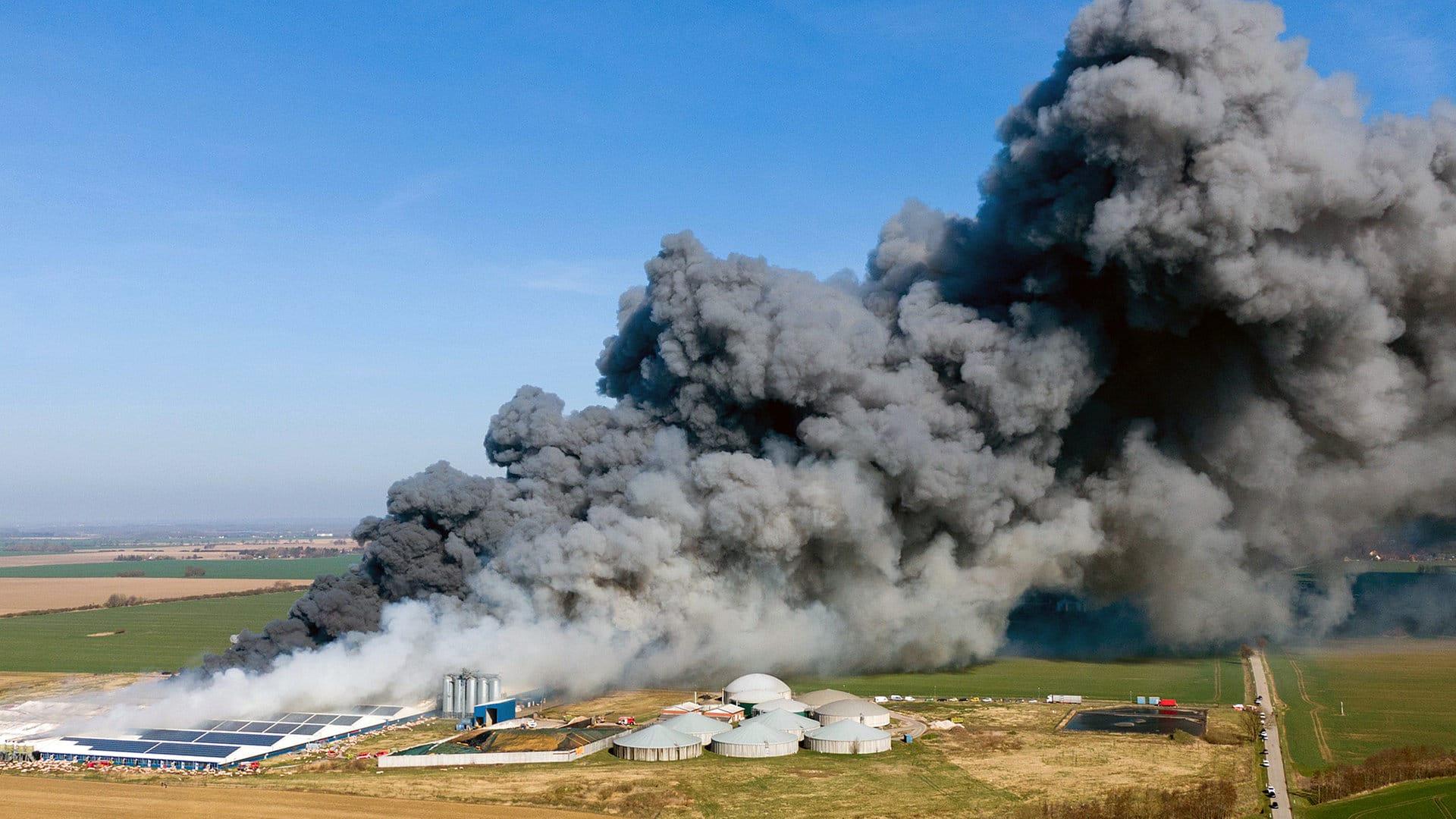 У Німеччині в масштабній пожежі на свинофермі загинули 55 тисяч тварин |  Європейська правда